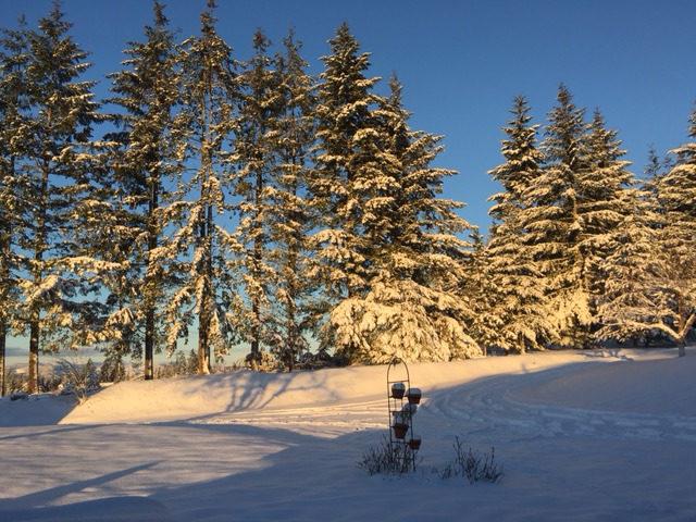 Beauty in Winter